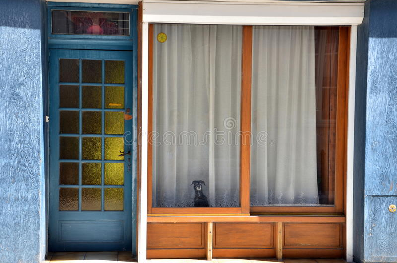 Dog stares at you from behind the old shop window stock photography