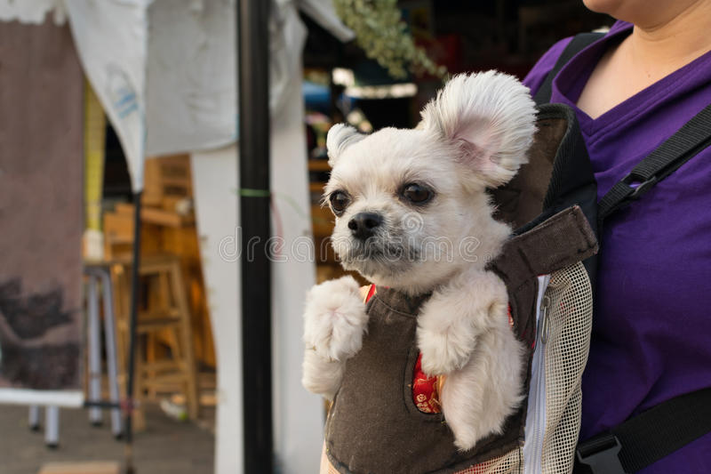 Dog stay in knapsack. Cute Dog staying in the knapsack or bag by Thai women shopping in market royalty free stock photography