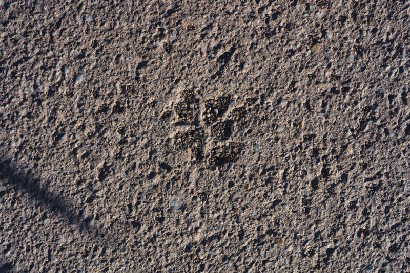 Dog steps in asphalt royalty free stock photos