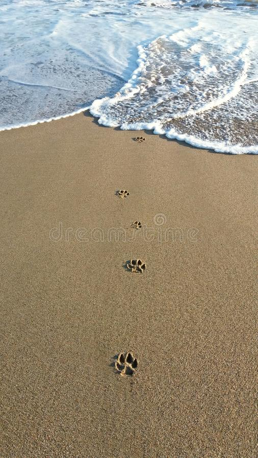 Free Dog Steps In The Sand Stock Photos - 115669383