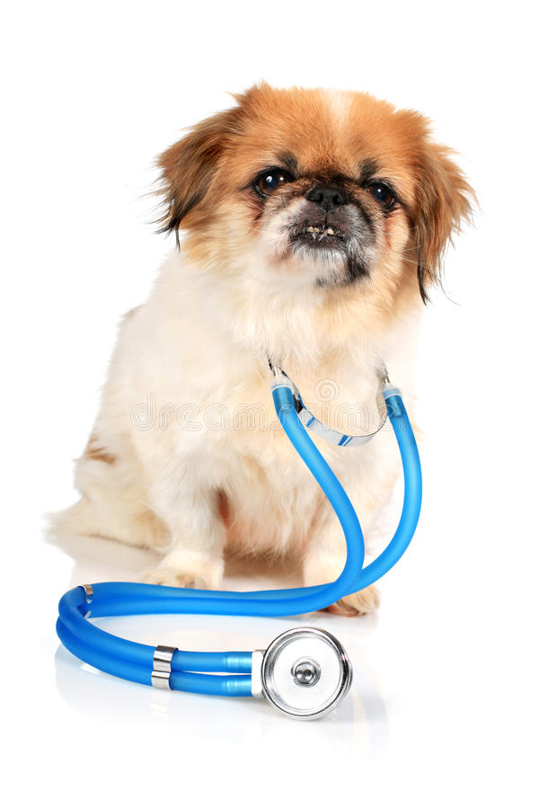 Dog and stethoscope.