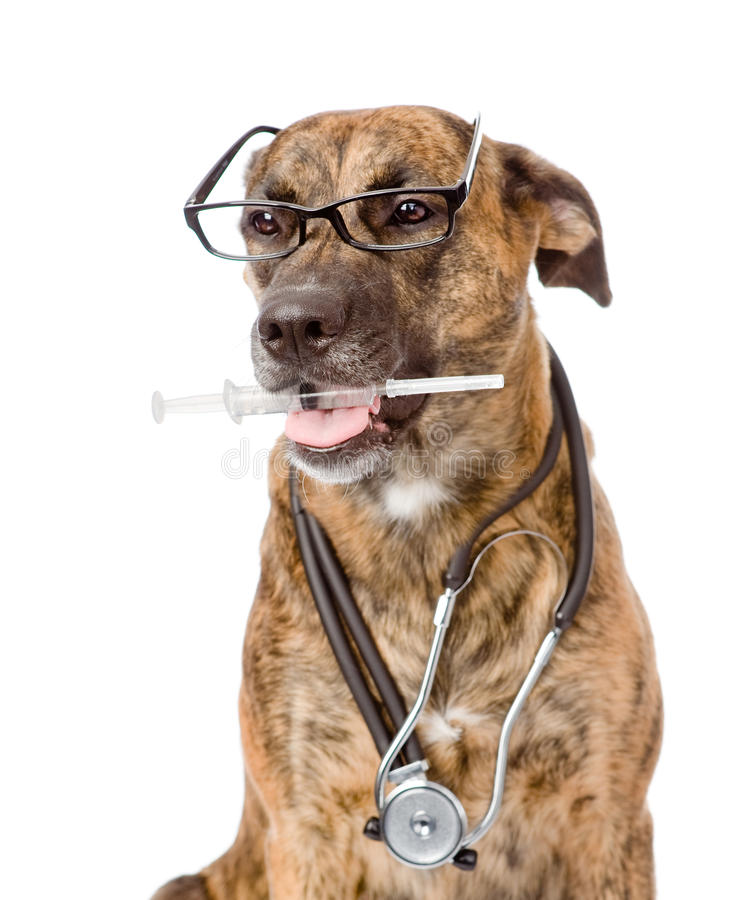 Dog with a stethoscope on his neck holding syringe in its mouth stock photo