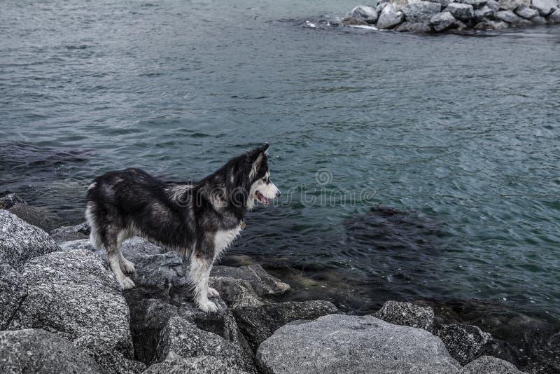 Dog stood on rocks by sea stock photo