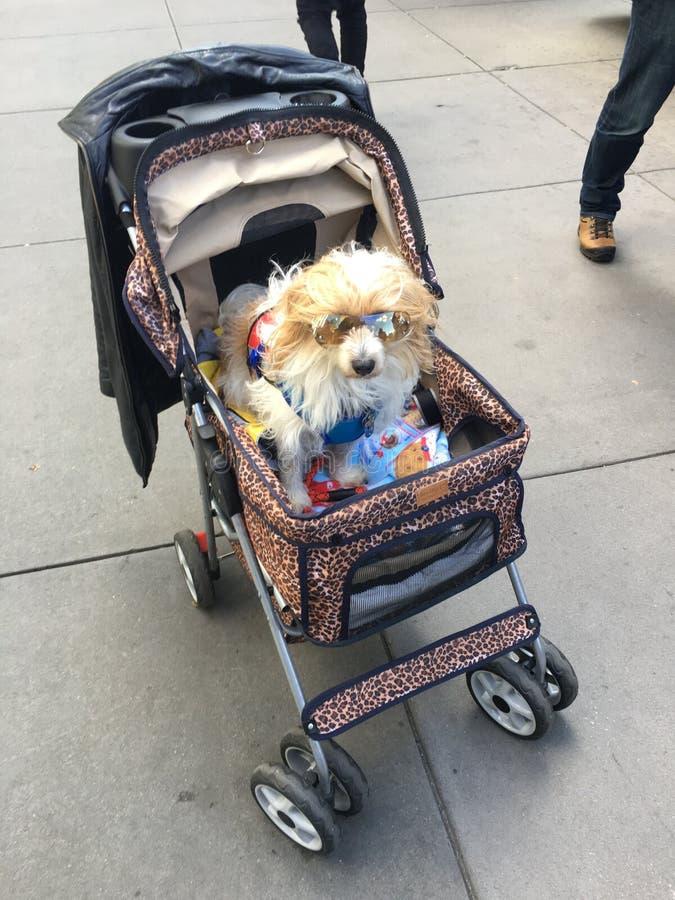 Dog on stroller royalty free stock photos