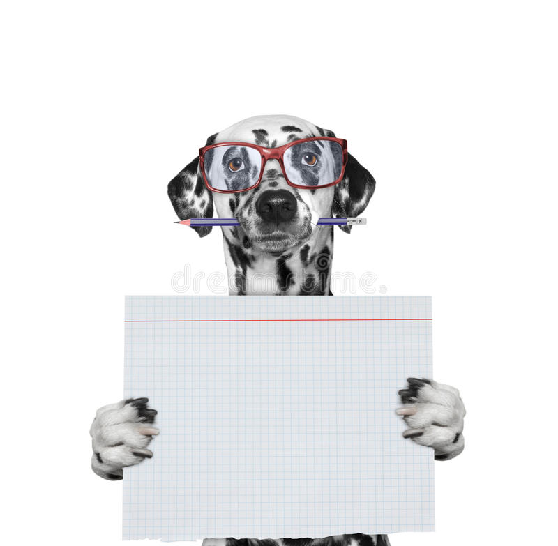 Dog studend at school holding piece of paper royalty free stock photos