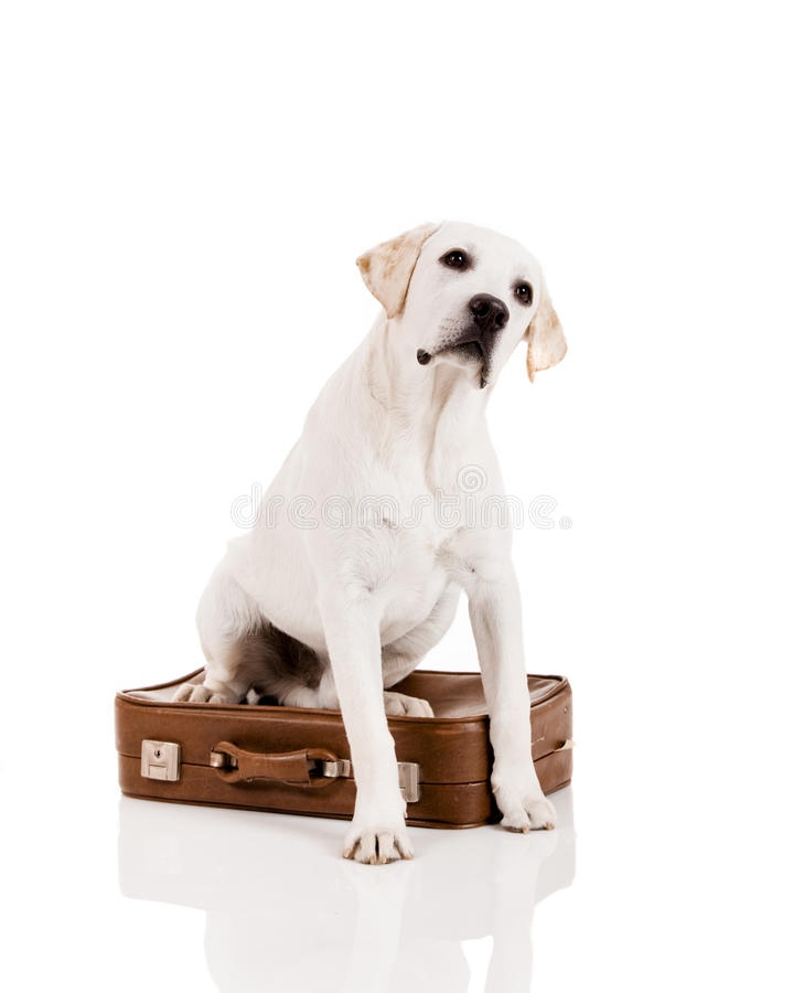 Dog with a suitcase royalty free stock photos