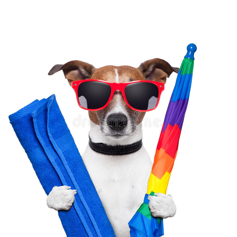 Dog summer holidays. Umbrella and towel royalty free stock photography