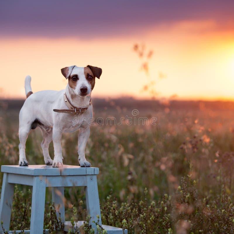 Dog at summer stock photos