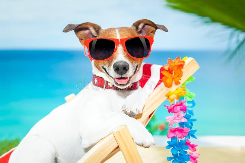 Dog summer vacation stock image. Image of beach, holiday ...