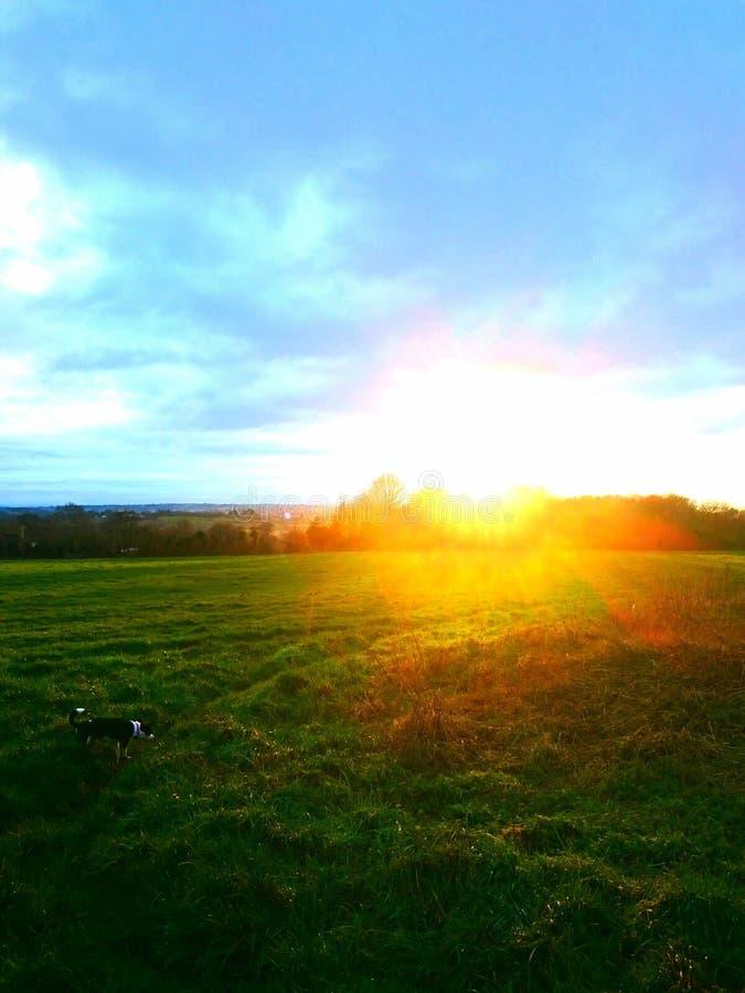 Dog in the sun stock photography