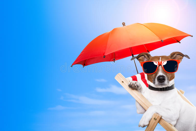 Dog sunbathing on a deck chair. With empty space on side stock photography