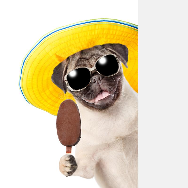 Dog in sunglasses and hat holding ice cream and peeking from behind empty board. isolated on white background.  royalty free stock photography