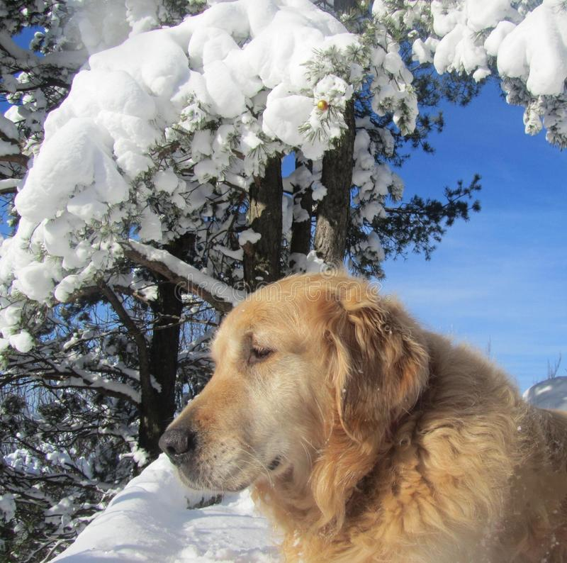 Download DOG with winter background stock image. Image of domestic - 82192869
