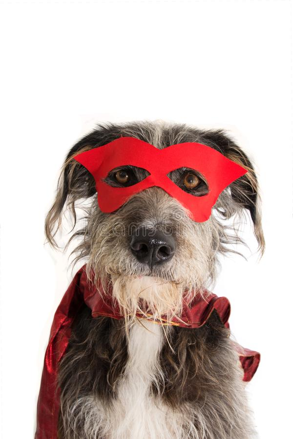 DOG SUPER HERO COSTUME.FUNNY PUPPY WEARING A RED MASK AND A CAPE.  CARNIVAL OR HALLOWEEN. ISOLATED STUDIO SHOT AGAINST WHITE. DOG SUPER HERO COSTUME.FUNNY PUPPY stock images