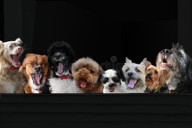 Dog supporters  on the grandstand. Fans sit on the grandstand and loudly fire her team. They shout with enthusiasm stock photos