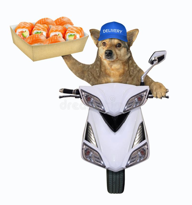 Dog Scooter Stock Images - Download 349 Royalty Free Photos