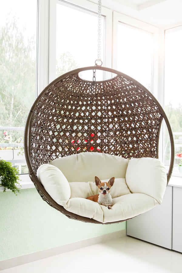 Download Dog In A Suspended Chair Stock Image. Image Of Rich, Mammal    70783495