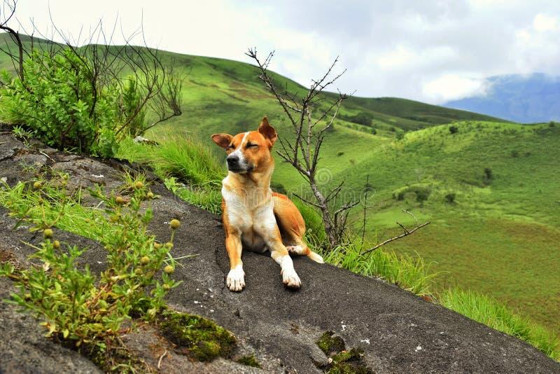 Dog Swag royalty free stock image