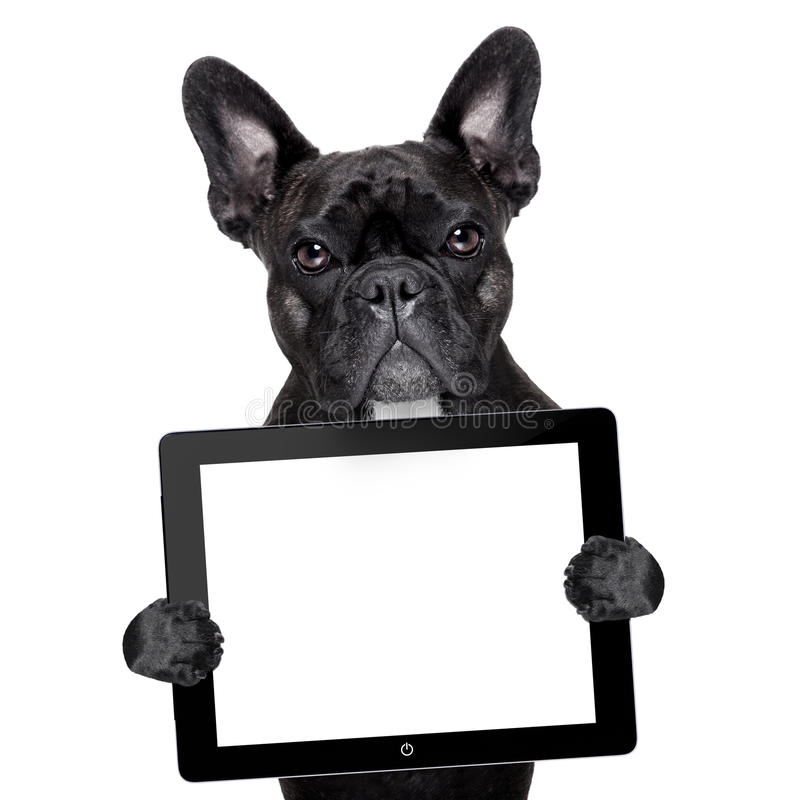 Dog with tablet pc royalty free stock images