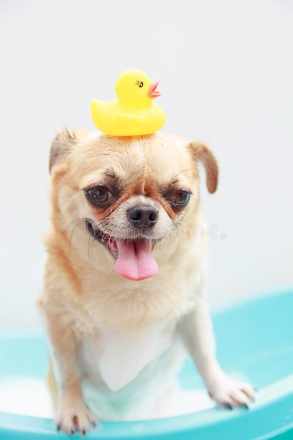 Free Dog Taking A Shower Stock Photography - 104297652