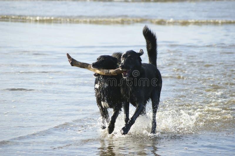 Dog Teamwork royalty free stock image
