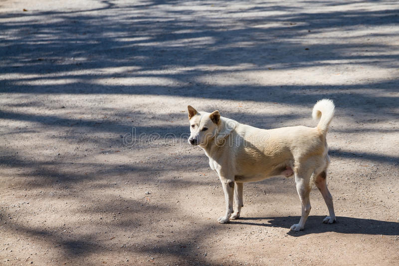 Download Dog In The Temple Thailand. Stock Image - Image: 83705377
