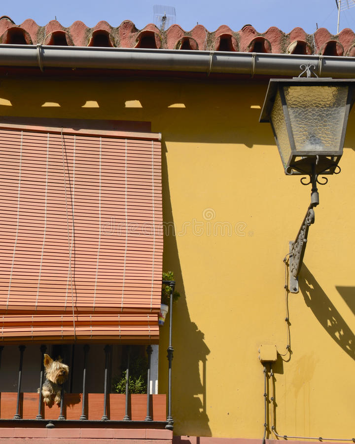 Download Dog in terrace stock image. Image of window, funny, streetlight - 26935477