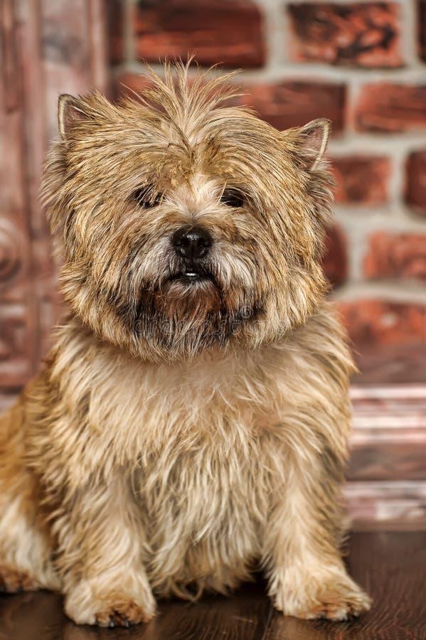 Dog terrier stock photo