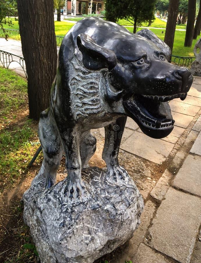 Dog royalty free stock photography