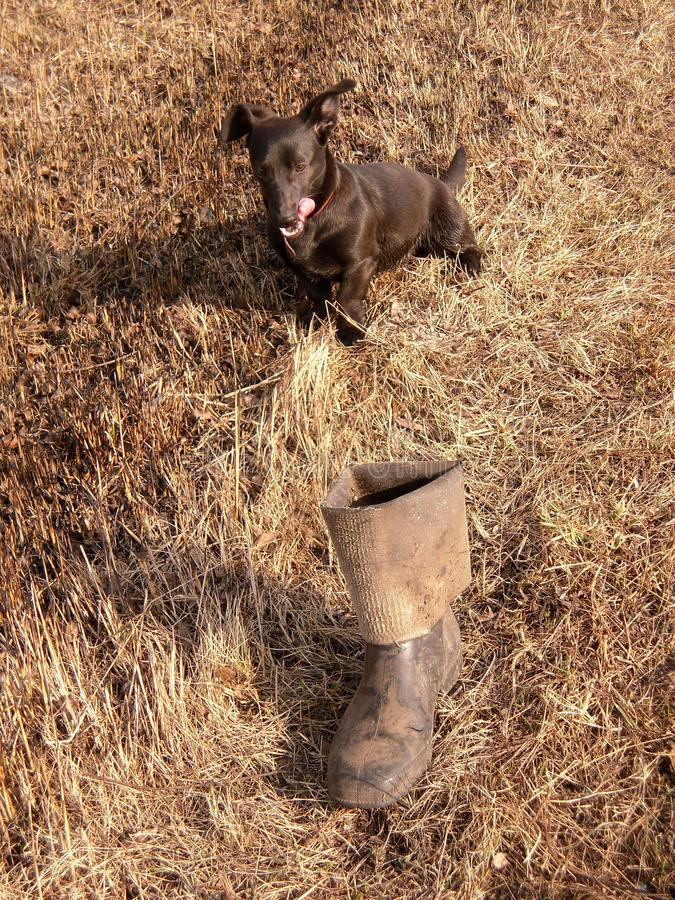 The dog and thrown the boots stock images
