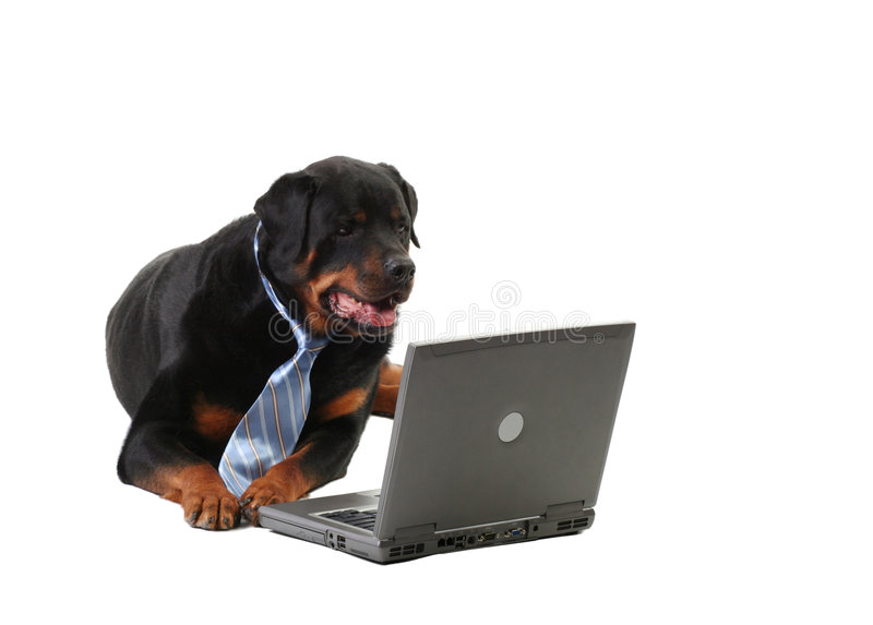 Dog in a tie. Business-guard dog laying down, internet security concept, isolated on white royalty free stock photo