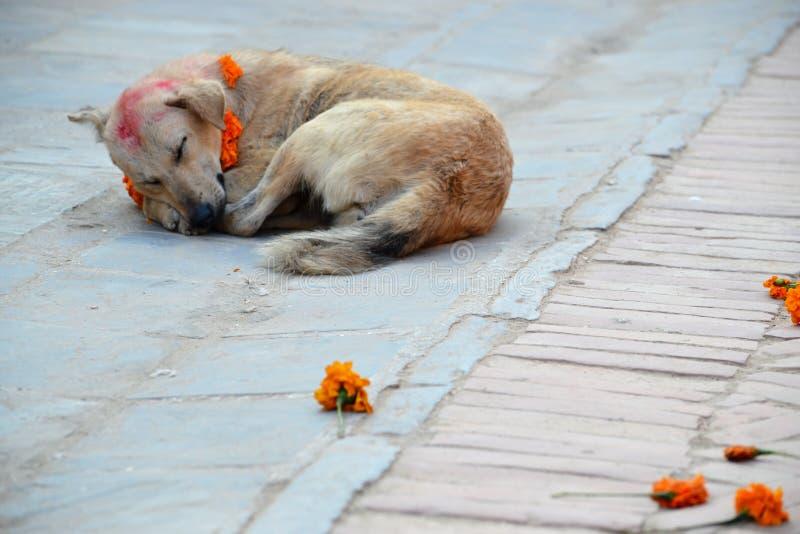 Dog with Tika on Dog Festival stock image