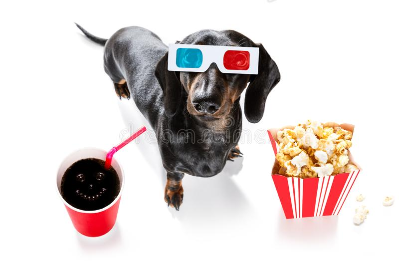 Dog to the movies stock photography