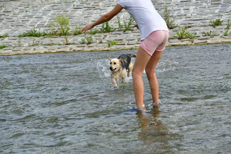 Dog to splash in water during hot summer stock images
