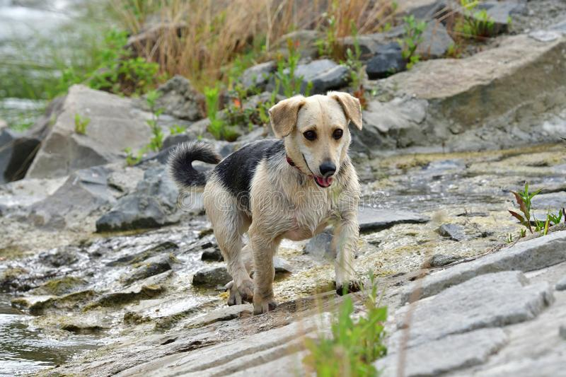 Dog to refresh in water during hot summer royalty free stock image