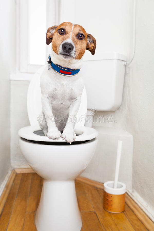 Dog on toilet seat stock photo