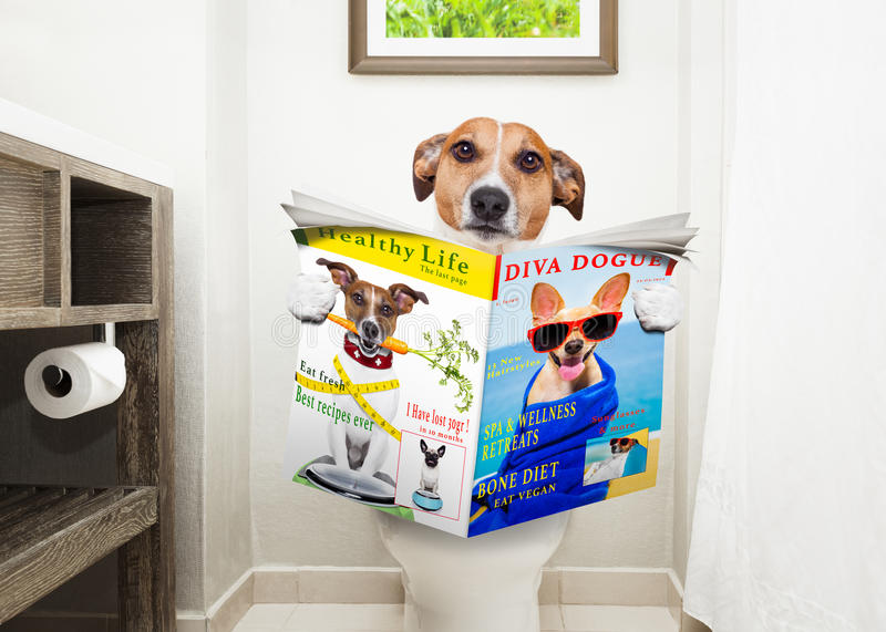 Dog on toilet seat reading newspaper stock images