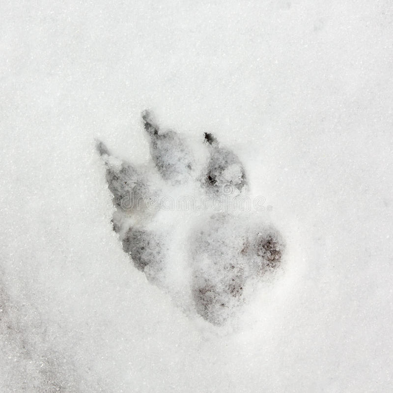 Dog track footprint on snow stock photo image of claws frozen download dog track footprint on snow stock photo image of claws frozen publicscrutiny Choice Image