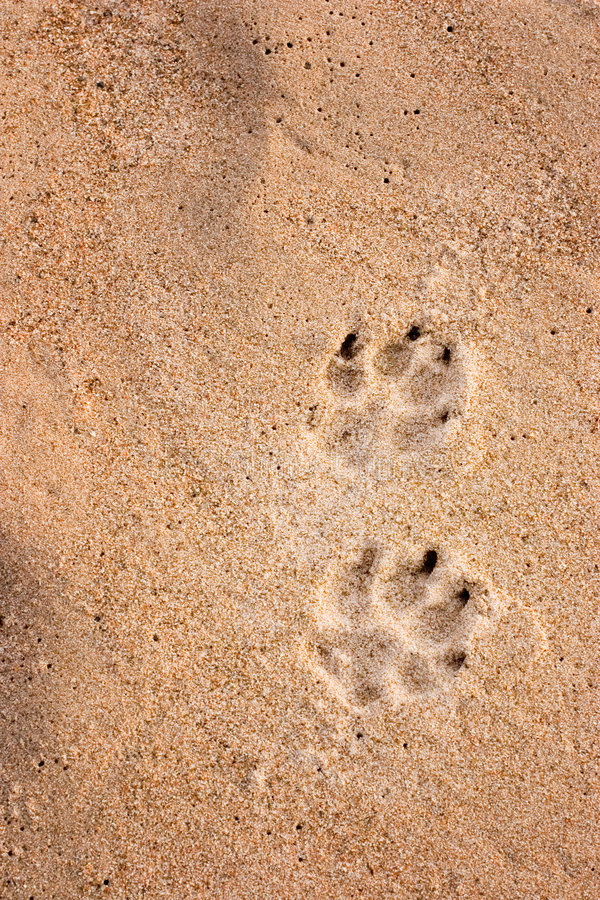 Free Dog Tracks Royalty Free Stock Photos - 1010678