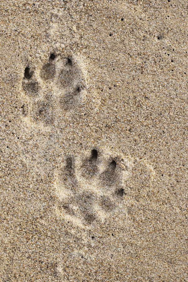 Free Dog Tracks Stock Images - 7566024