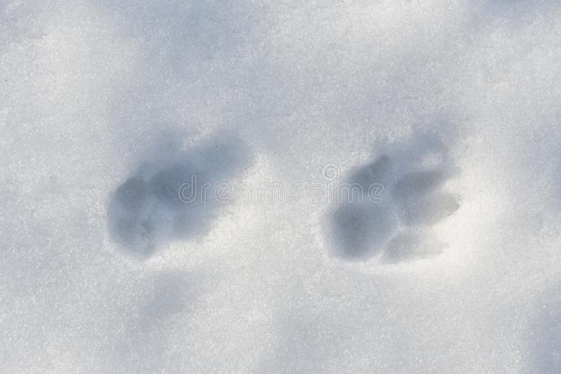 Dog tracks in the snow stock photo image of background 110617152 download dog tracks in the snow stock photo image of background 110617152 publicscrutiny Choice Image