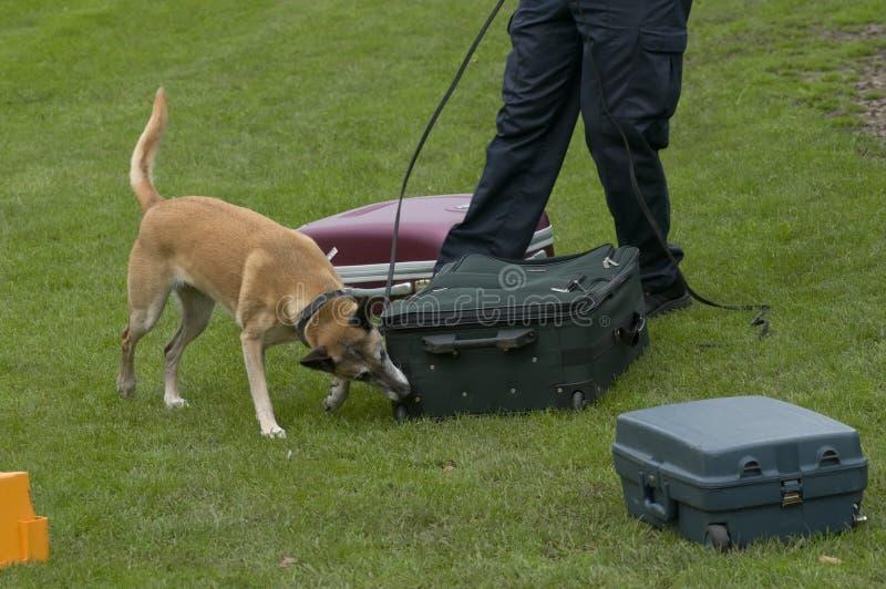 Download Dog training stock photo. Image of explosive, training - 20741810