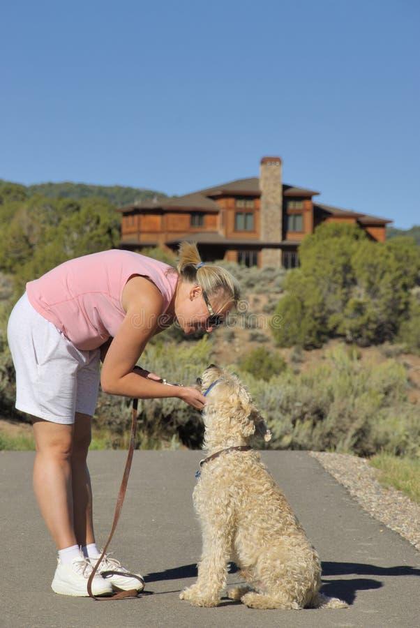 Dog training royalty free stock photo