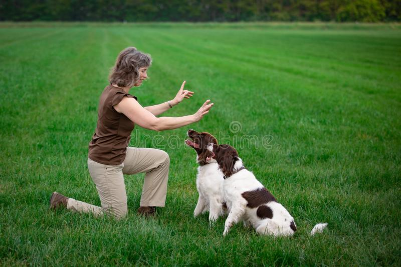 Dog training dogs are looking up obeying  their owner. Dog training: two dogs are looking up and obeying  their owner who is pointing with her fingers royalty free stock images