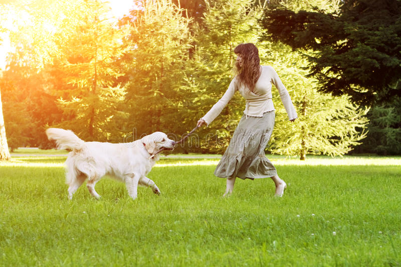 Dog training. Girl with retriever playing in the park. Woman walking a pet on a background summer The landscape. Joyful summer sc stock photo