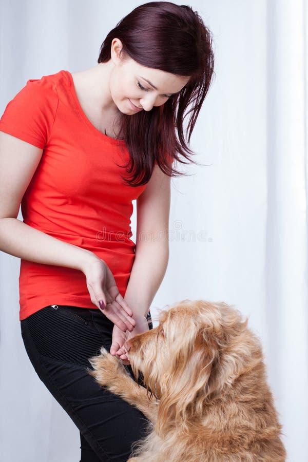 Dog training. Owner rewarding dog with snack after training stock photography