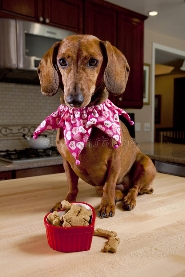 Dog with treats in heart shaped bowl stock images