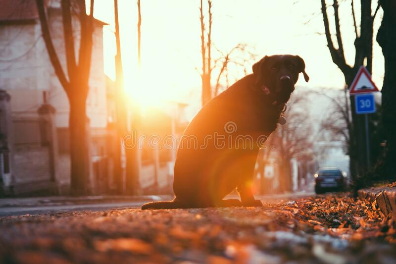 Dog by the Tree at Sunset stock photo