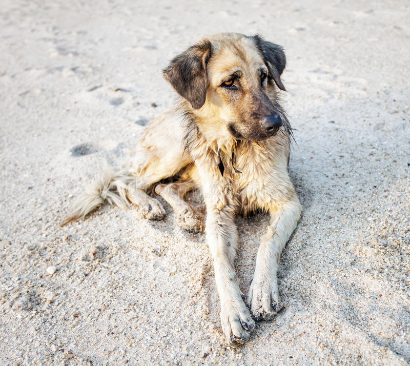 Download Dog on a tropical beach stock image. Image of cloud, evening - 26580093
