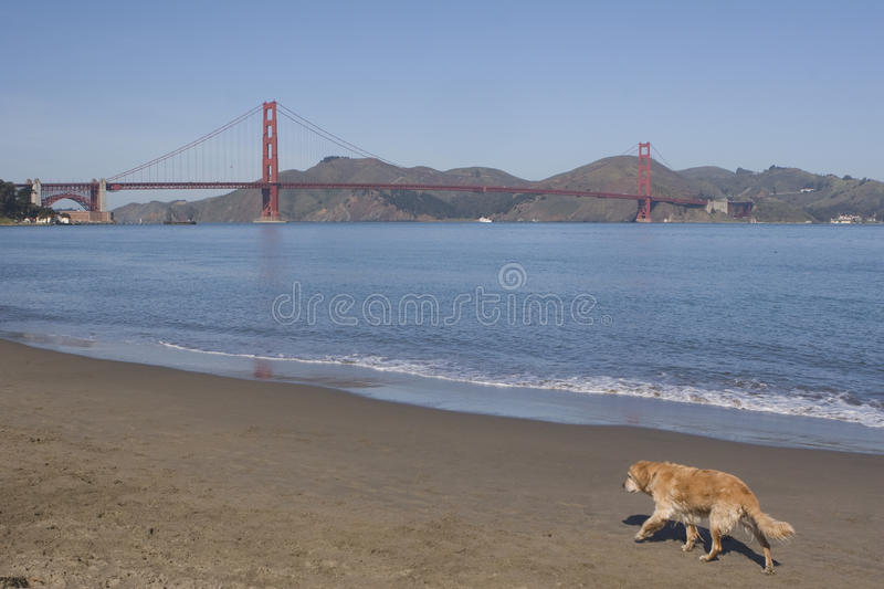 Download Dog Trot stock image. Image of california, shore, animal - 11752091